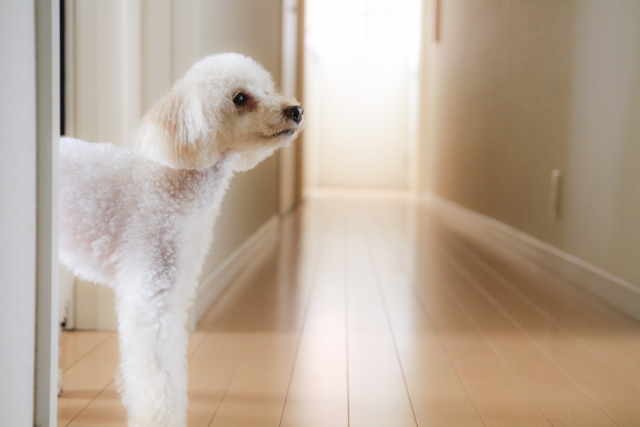 犬のしつけ (1)