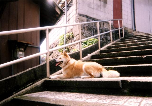犬のしつけ (10)