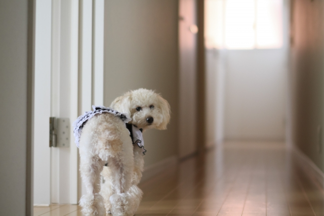 犬 留守番 (1)
