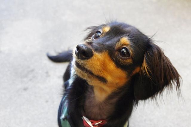 犬の躾 (1)