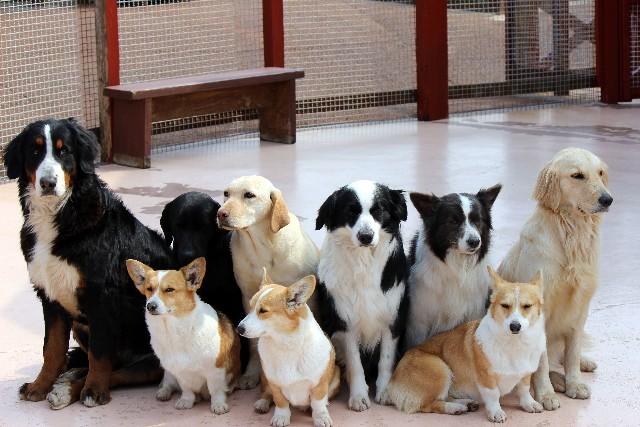 犬の躾 (8)