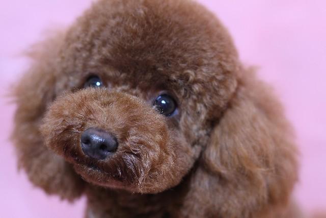 犬 ワクチン (1)