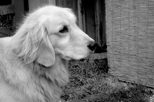 犬の葬式 (3)