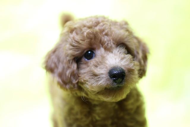 犬 ワクチン (2)
