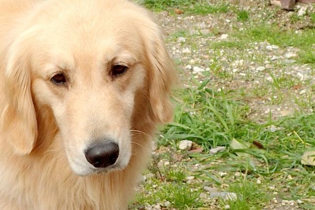 犬 (1)