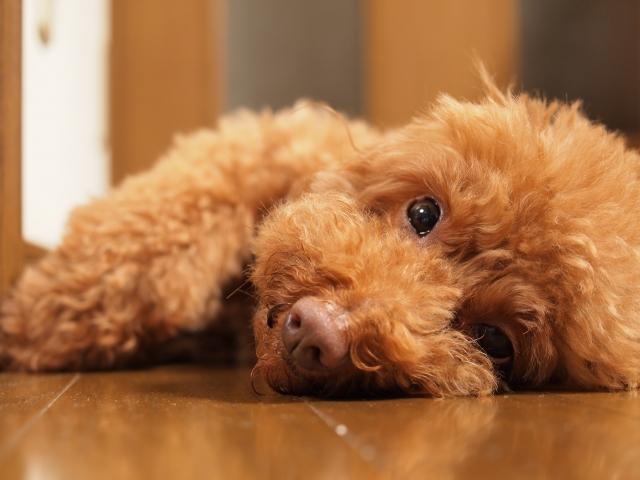 犬の病気 (4)