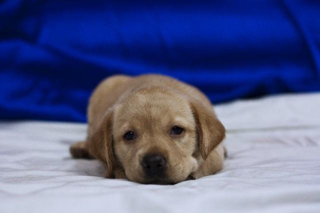 犬の病気 (2)