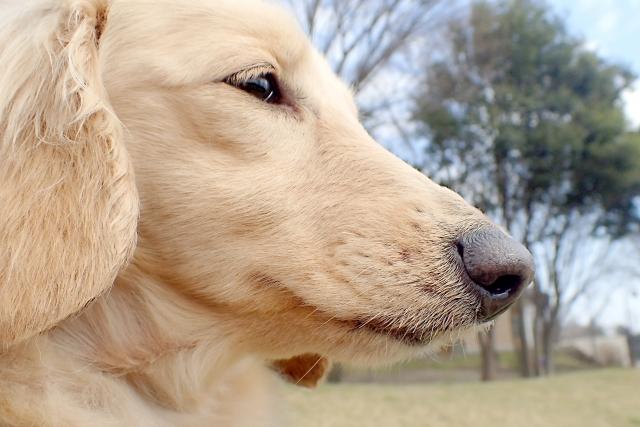 犬 (2)