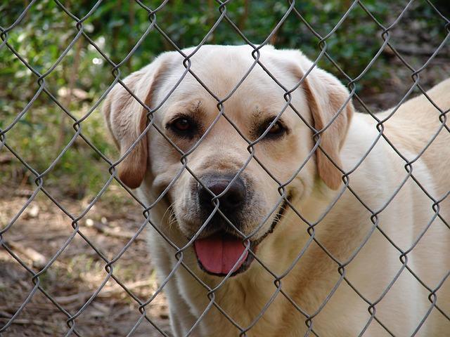 fence-1592019_640