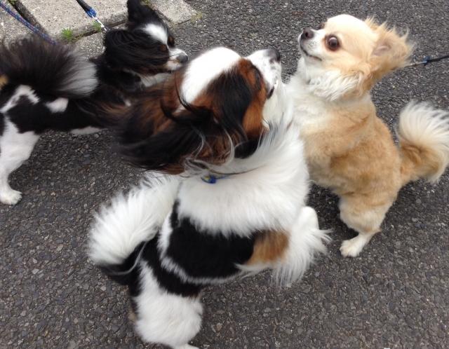 犬同士の (2)