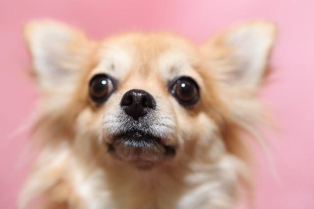 犬の噛み癖 (4)