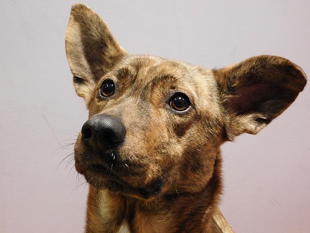 dog-1188518_640