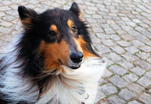 dog-1272880_640