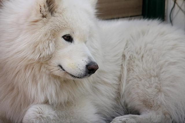 dog-1394363_640