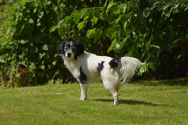 dog-1527928_640