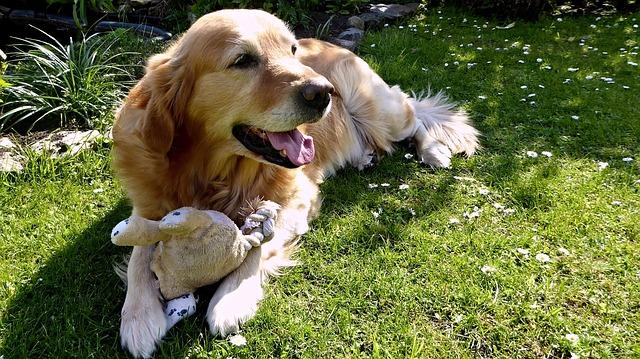 dog-1705527_640