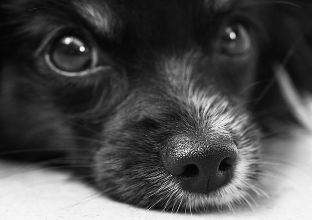 dog-187817_640