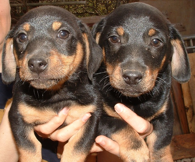dogs-94473_640