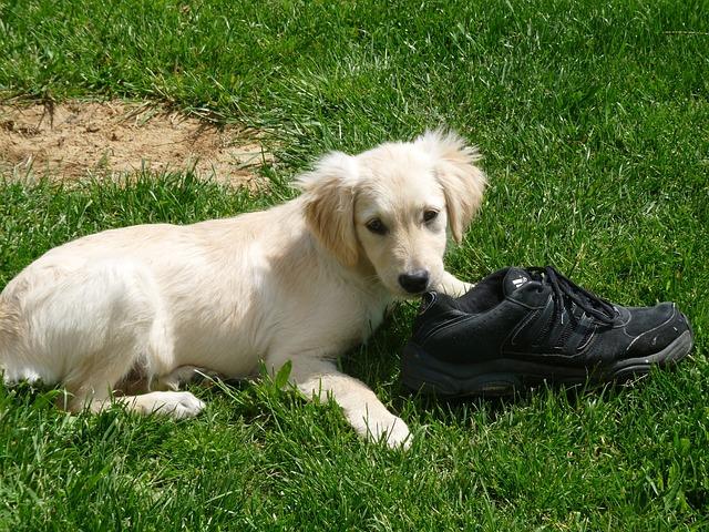 puppy-315322_640