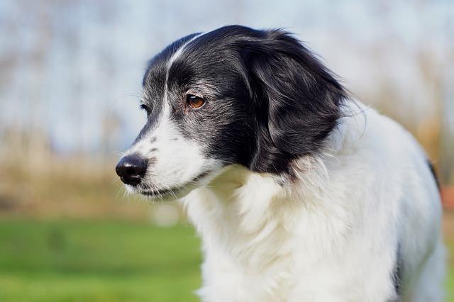 dog-268446_640