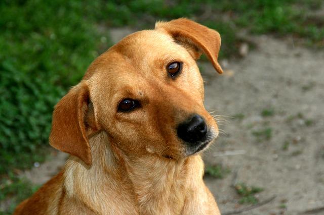 dog-763057_640