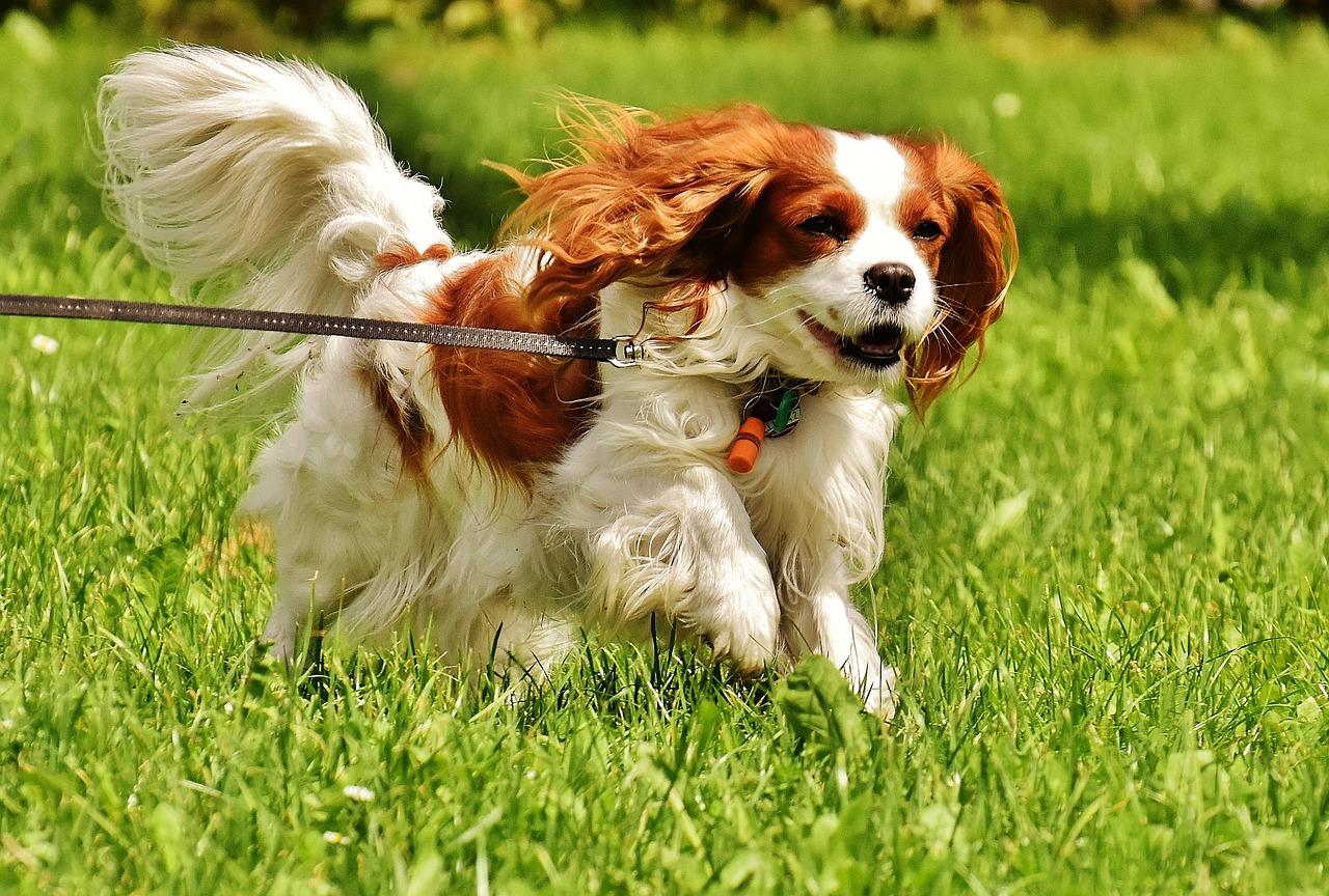 dog-1610937_1280
