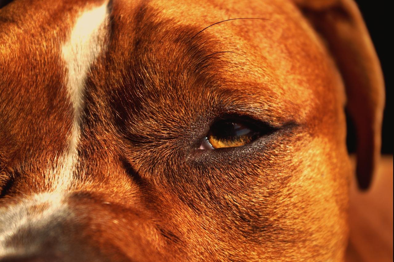 dog-1611793_1280