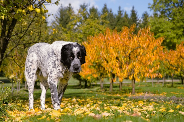 dog-1759072_640