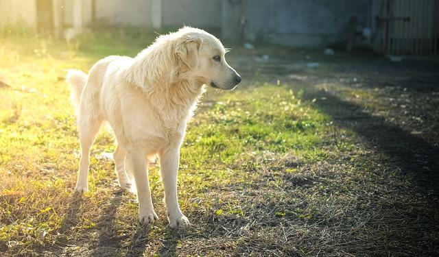 dog-1802368_640