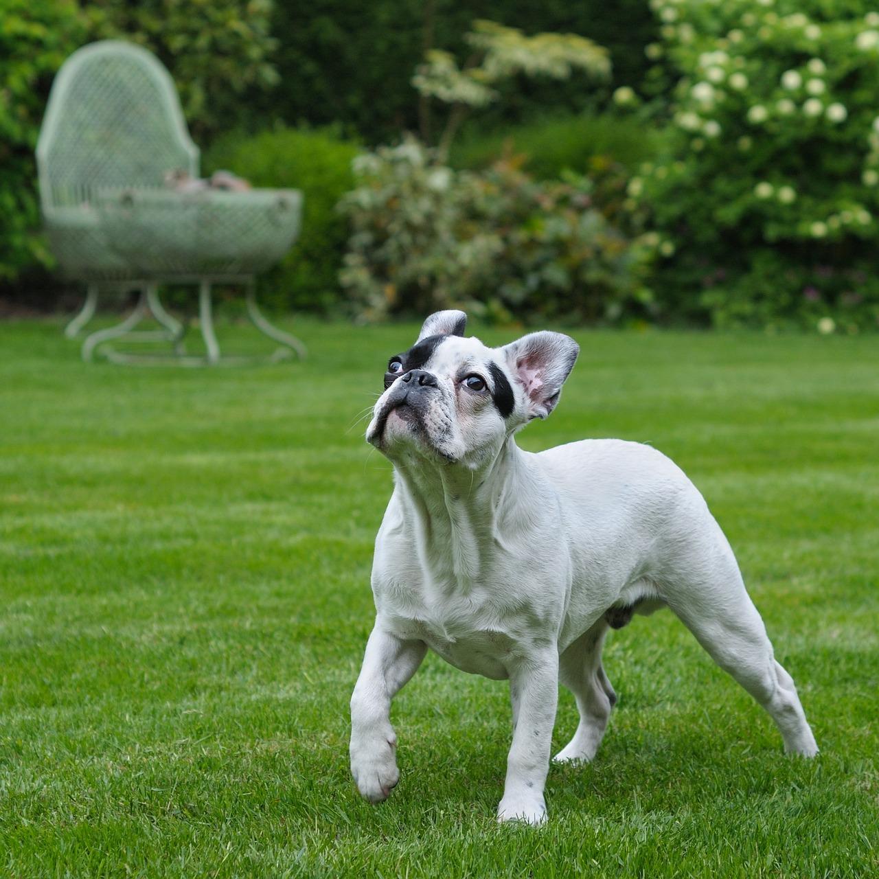 dog-1885202_1280