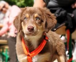 dog-1912730_1280