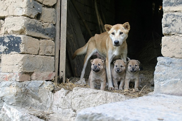 dogs-1029124_640