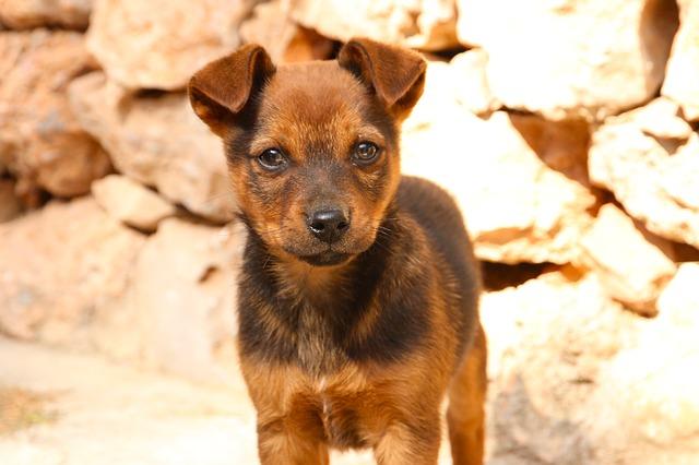 puppy-1675170_640