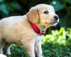 puppies-1871261_1280