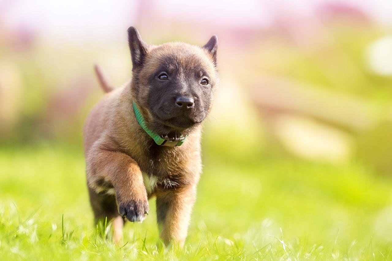 puppy-1726419_1280
