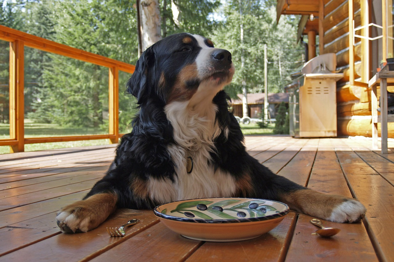 bernese-mountain-dog-208092_1280