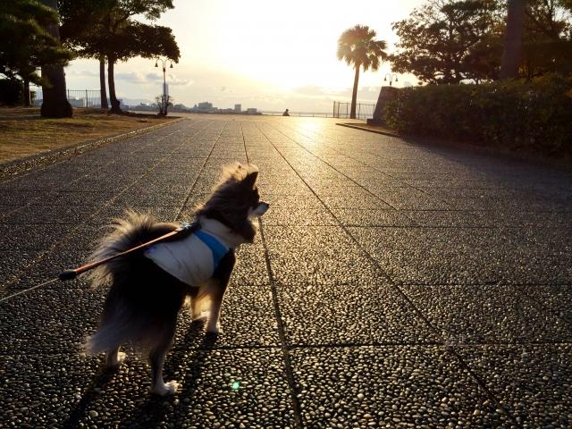 犬のしつけ (6)