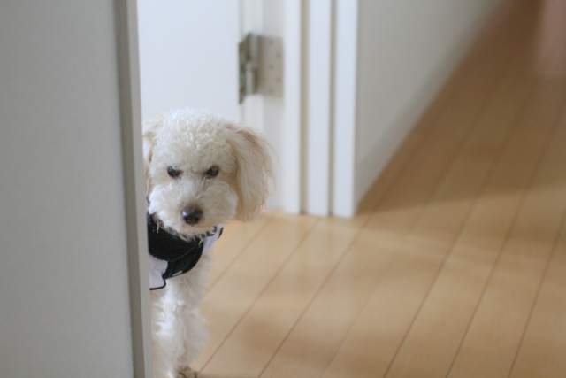 犬 留守番 (2)