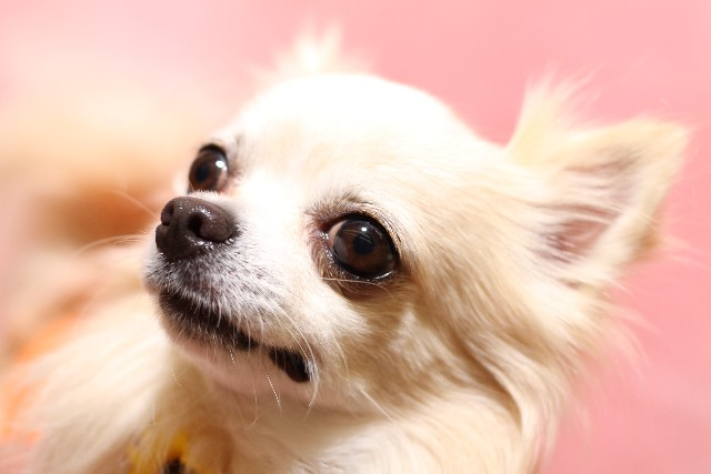 犬 ワクチン (4)