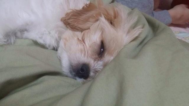 犬の病気 (6)