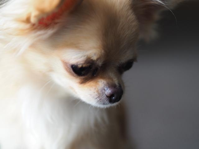 犬の病気 (3)