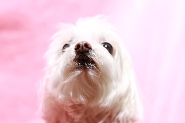 犬 ワクチン (3)