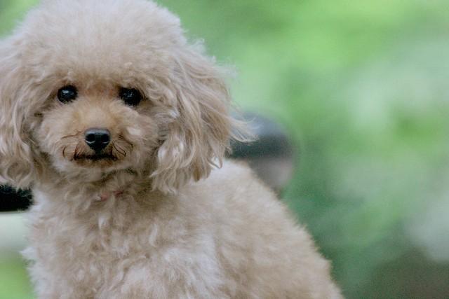 犬の病気 (1)