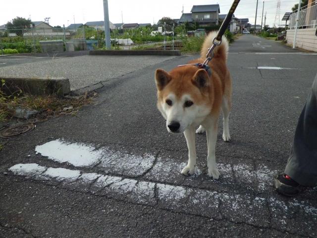 犬の散歩 (2)