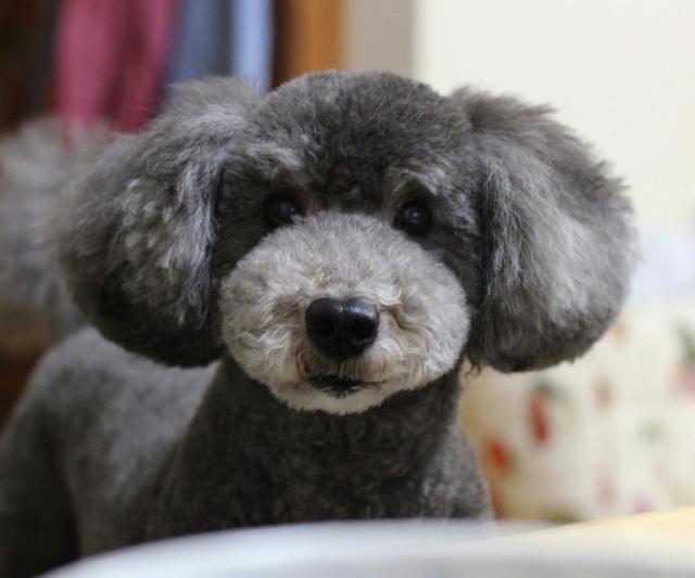犬 (4)