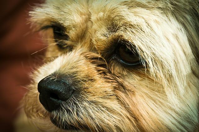 dog-1453278_640