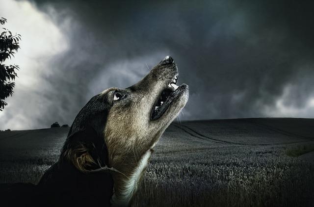 dog-183288_640