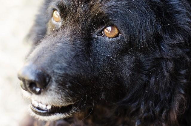 犬の噛み癖 (3)