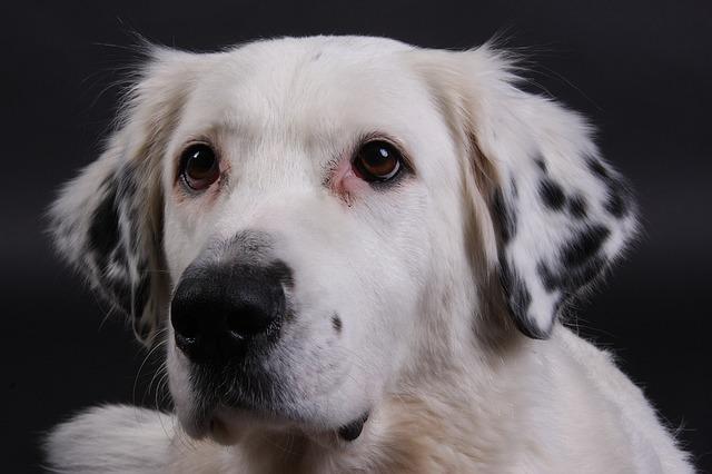 dog-1517253_640