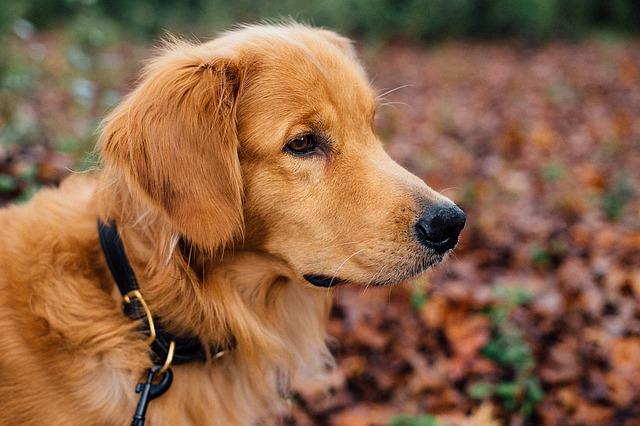 dog-1082307_640